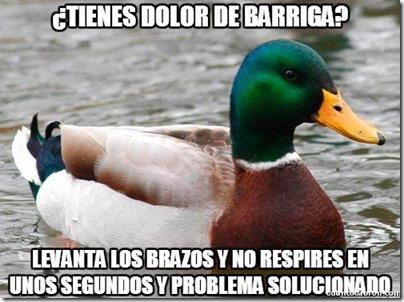 0 pato consejos cosasdivertidas info (8)