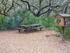 cumberland-island 039