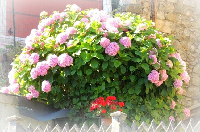 fiori a le grazie