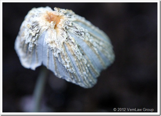 MushroomDecayIMG_2058