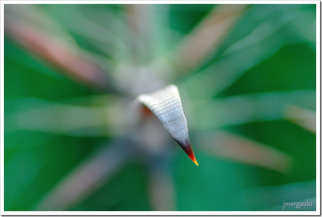 Gansocactus