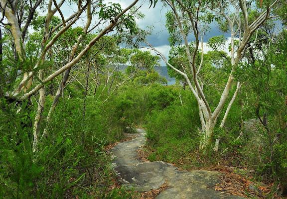Chemin aux abords de la Hawkesbury River (NSW, Australie), 24 février 2011. Photo : Barbara Kedzierski