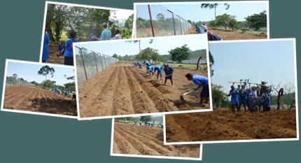 View Market Gardening Farming God's Way - TGHS