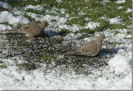 Doves_Feb