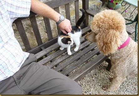 Lulu meets Daisy5