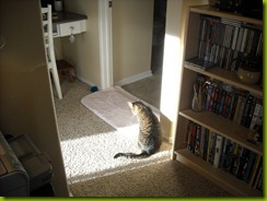 sunshine kitty blog