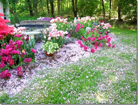 flower petalls2