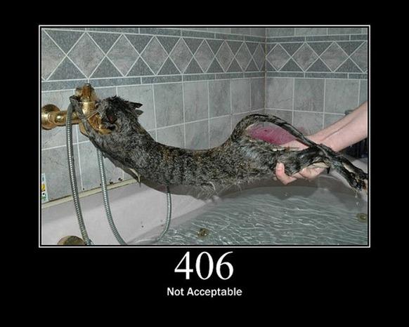 HTTP-Status-Cats-09