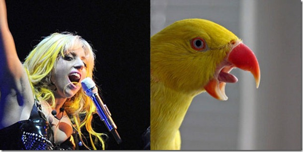 pop-stars-birds-6