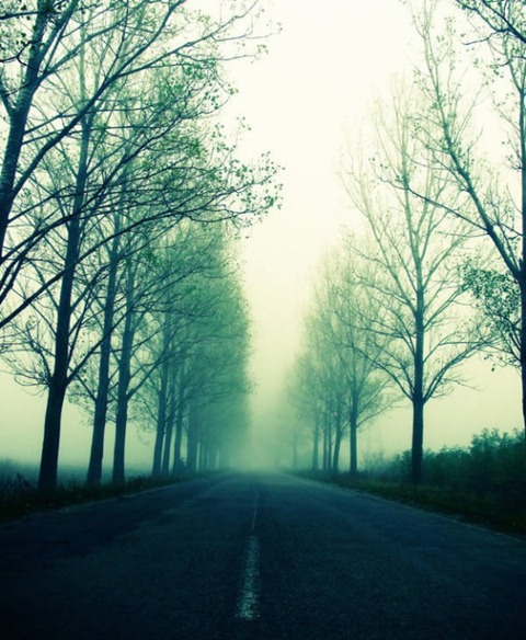 Green-Misty-Road