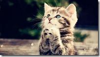 rezar gifs animados (2)