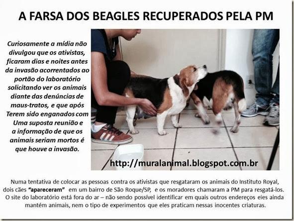 A FARSA DOS BEAGLES RECUPERADOS PELA PM
