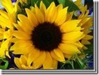 clip_image03952