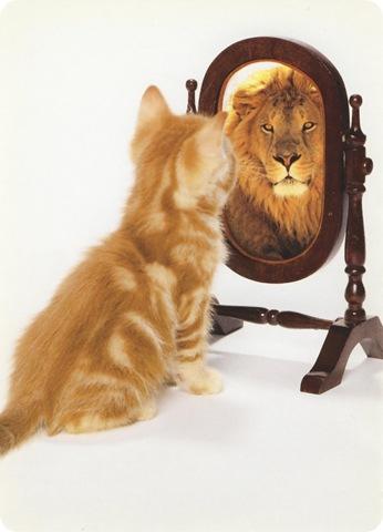Lion.Kitten
