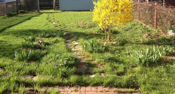 garden 1 - Photo Mar 29.jpg