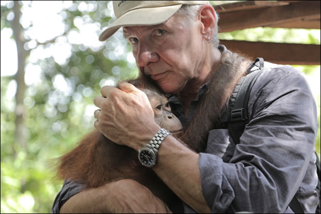 Actor Harrison Ford with an orphaned orangutan baby. Harrison Ford stirred up quite a flutter during his reporting trip to Indonesia when he bore down upon the country's foreign minister, asking repeatedly nothing was being done to curb illegal logging. Photo: Earth Island Institute