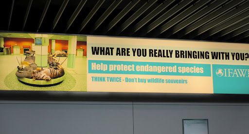 This sign was in the Amsterdam airport- cautioning travelers against taking exotic animals away from their natural habitats.