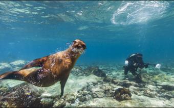 insulele Galapagos-street view