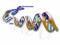 y-chromosome_dna_with_features