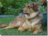 dog one