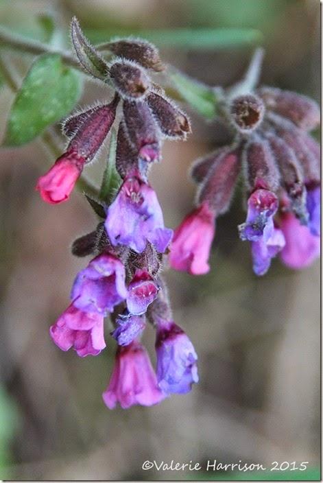 8-flowers