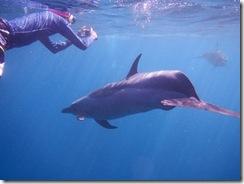 イルカツアー ハワイ島