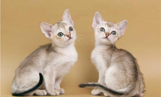 kittens_04a