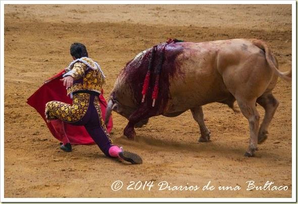 Toros 2014 (1)-42