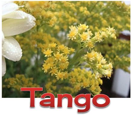 7 TANGO