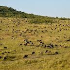 Teppich aus Gnus und Zebras in der Massai Mara © Foto: S.Schlesinger | Outback Africa Erlebnisreisen