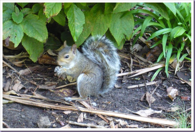 Esquilo-Parque-Cape-Town-África-do-Sul