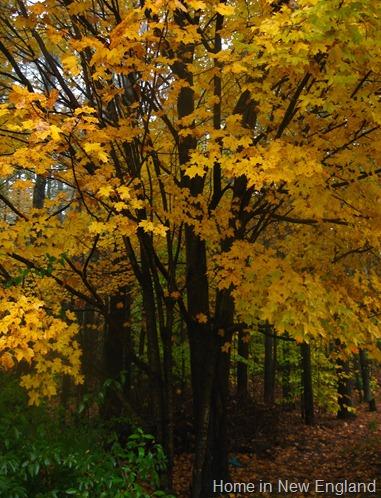 Fall 537