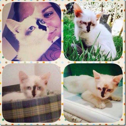 cat_moss