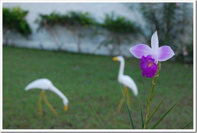 jardimBahia (3)