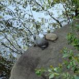 turtle lovers in Yoyogi, Tokyo, Japan