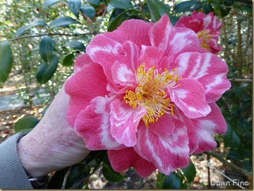Magnolia Plantation_152
