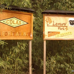 Lemurs Park::IMGP4463