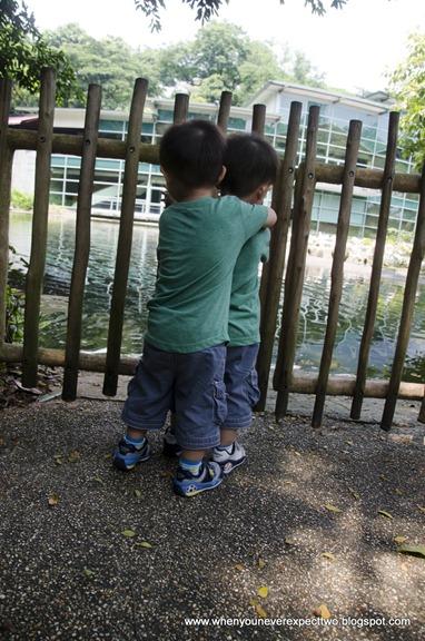 20110603_Jurong Bird park (27 of 53)