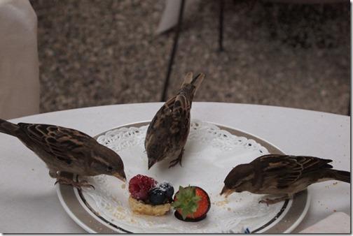 Wildlifephotographybird_thumb1