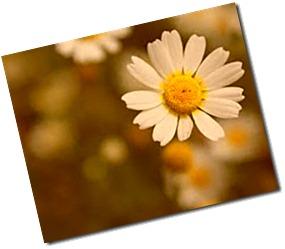 flor de luz 2