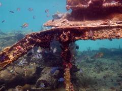 Snorkeling at a shipwreck in the Kuna Yala.