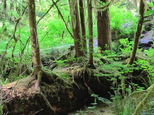VisitingHohRainForest-38-2014-05-21-20-45.jpg
