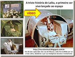 A triste história de Laika