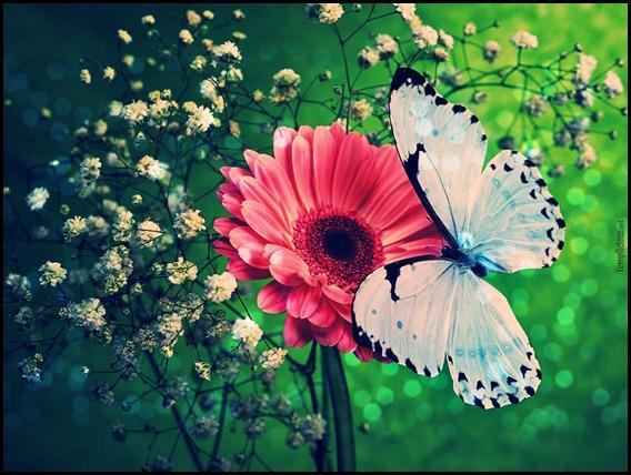 borboletas--vintage_7829_1600x1200
