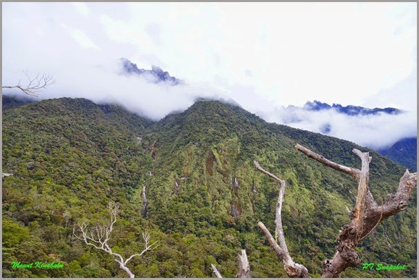 Mesilau View