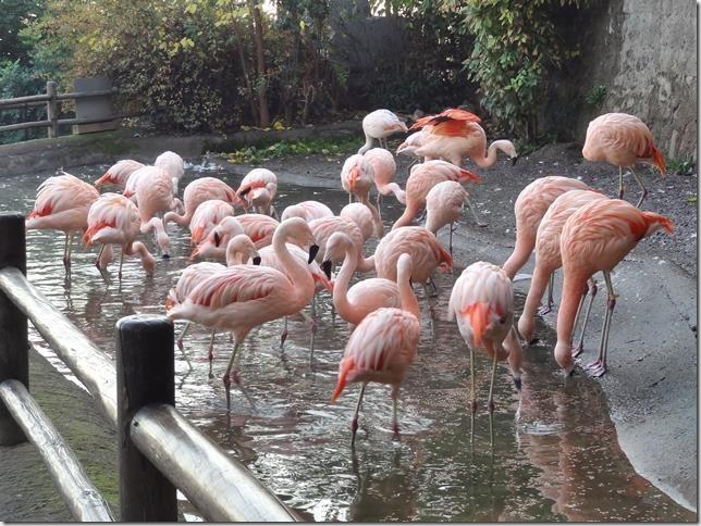 Santiago_Zoo_DSC03980