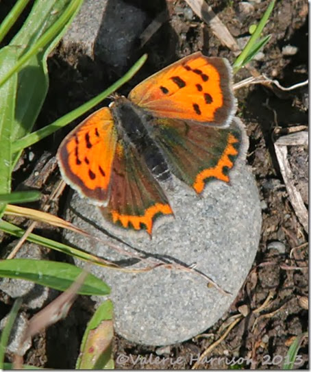 2-small-copper