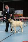 20130511-BMCN-Bullmastiff-Championship-Clubmatch-2141.jpg
