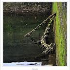 10getaria248.jpg