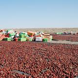 Mogui Cheng - Séchage de fruit dans le désert